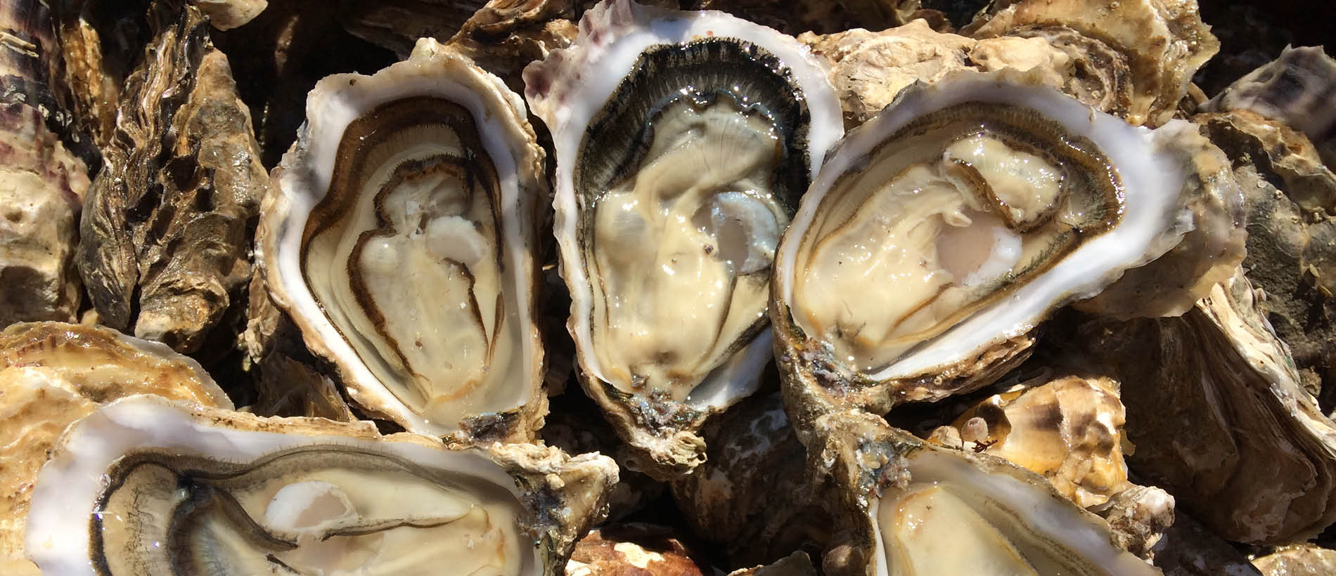 Oysters and periwinkles from Brittany