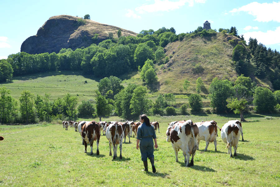 Ma-Petite-France_vaches